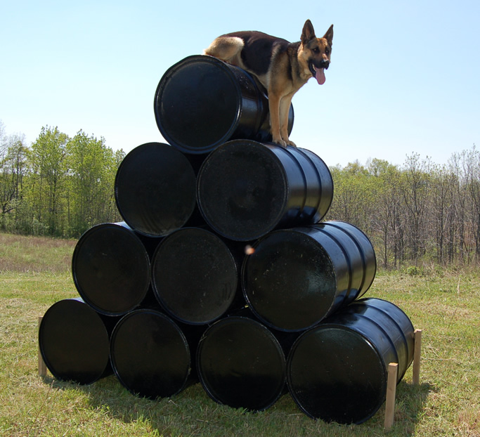 Customized Protection Dog Training