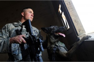 Trained Military Dogs